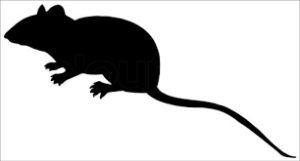 rat dda services